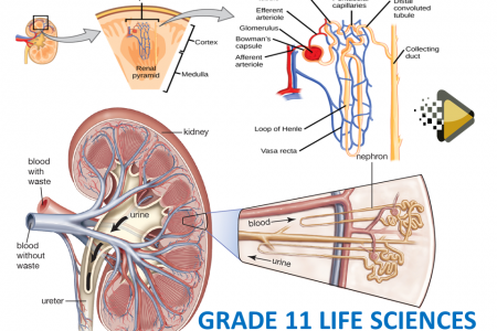 LIFE SCIENCES GRADE 11