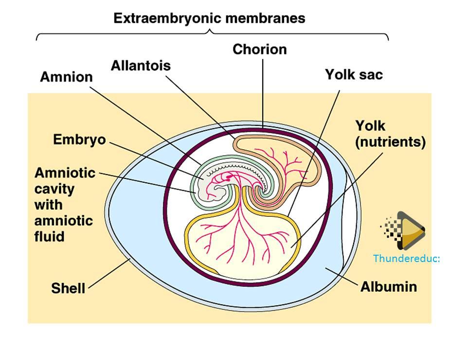 amnioc egg grade 12 term 2 life sciences